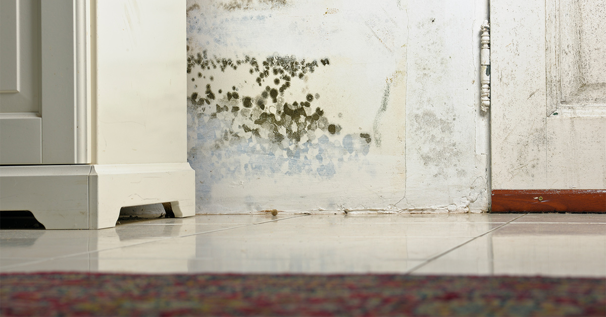 Can Black Mold Kill You Fortunately Probably Not