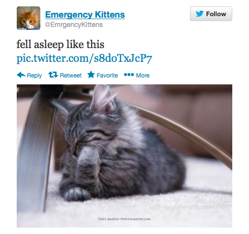 55 Must-Follow Twitter Accounts Guaranteed to Make Your Day
