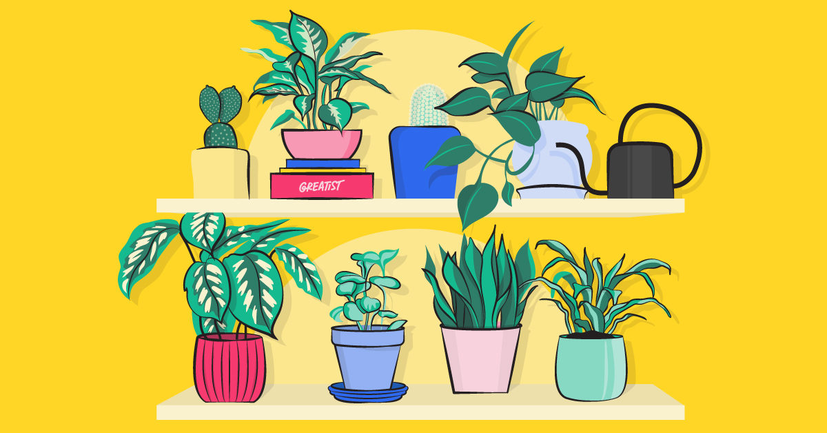 21 Types Of Indoor Plants Large And Small