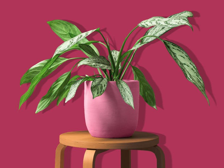 Best Plants To Grow Indoors 21 Of The Healthiest And Easier To Grow