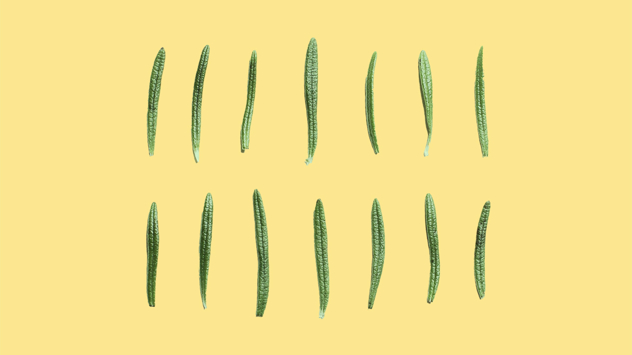 herb of rosemary on a yellow background