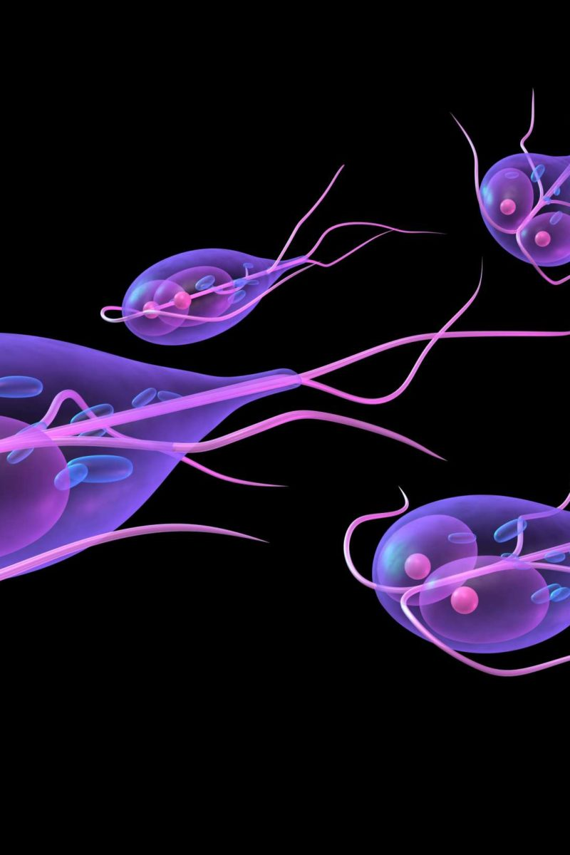 giardia intestinalis flagyl