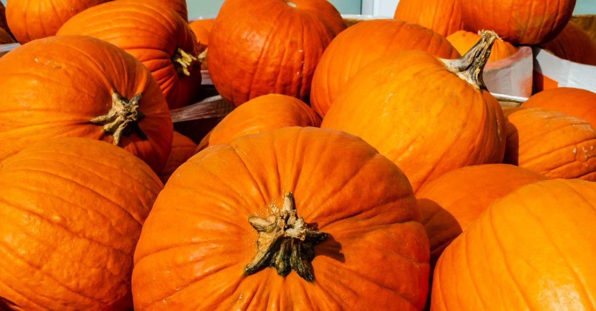 how to add pumpkin to your diet