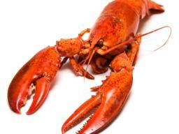 is lobster bad for dieting